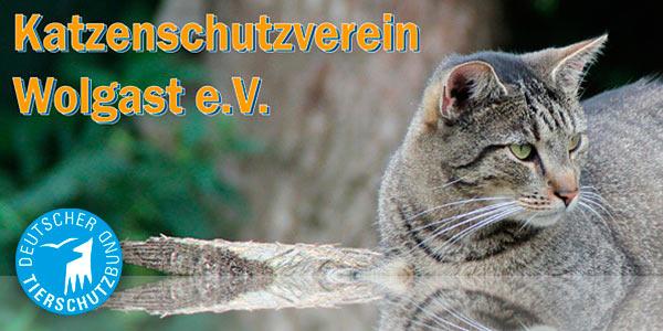 Katzenschutzverein
