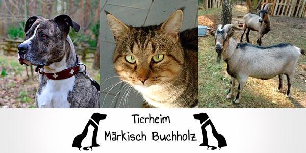Märkisch-Buchholz