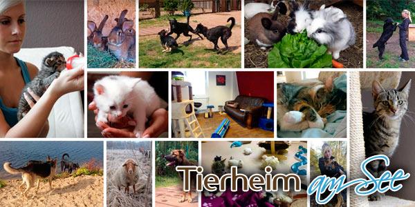 Tierheim-EHSt